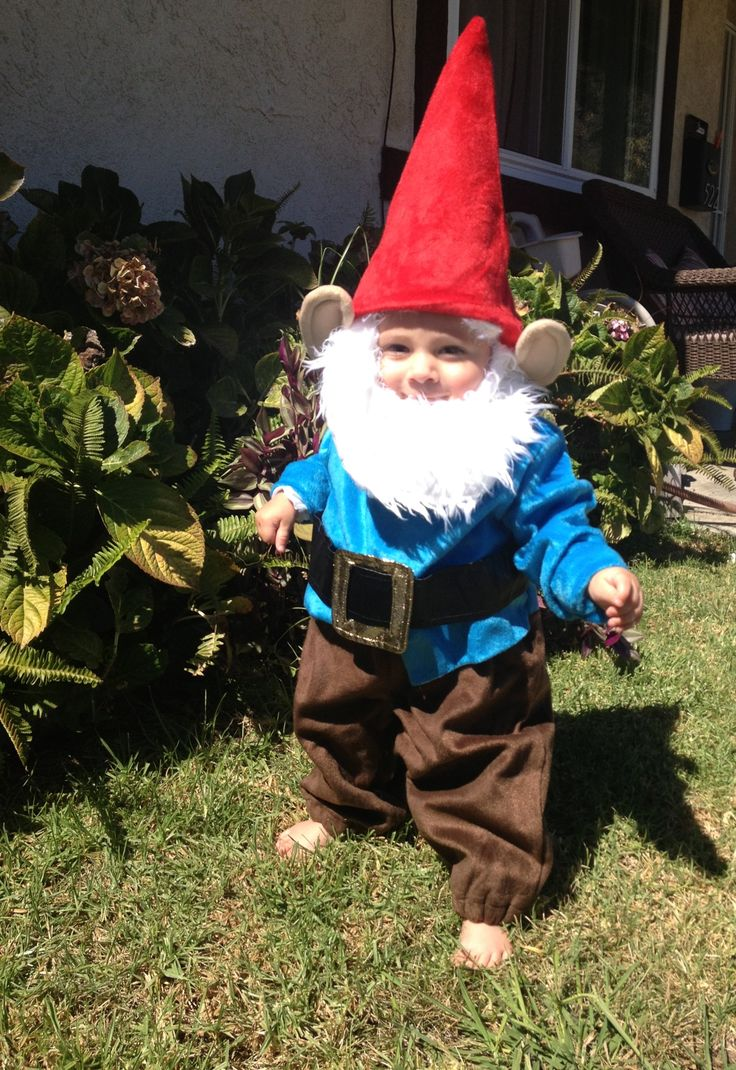 Cisco Bum the Garden Gnome 10 months old  His first Halloween costume.