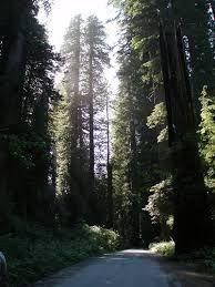 Resultado de imagen para bosques del sur de chile