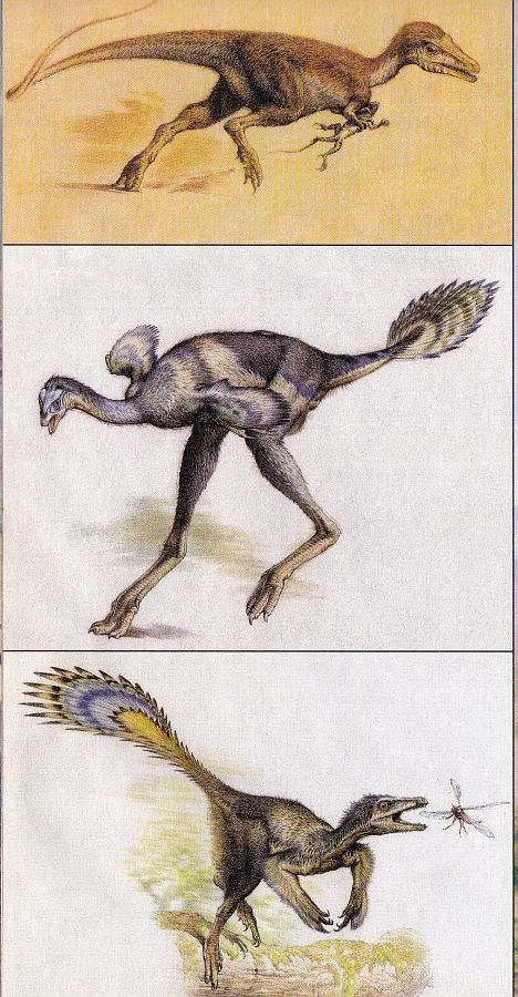pin by セツカンリン on 恐竜 dinosaur art fossils jurassic park