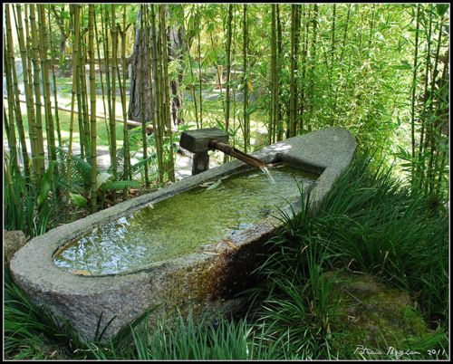 Outdoor stone tub. Next to my tree house.
