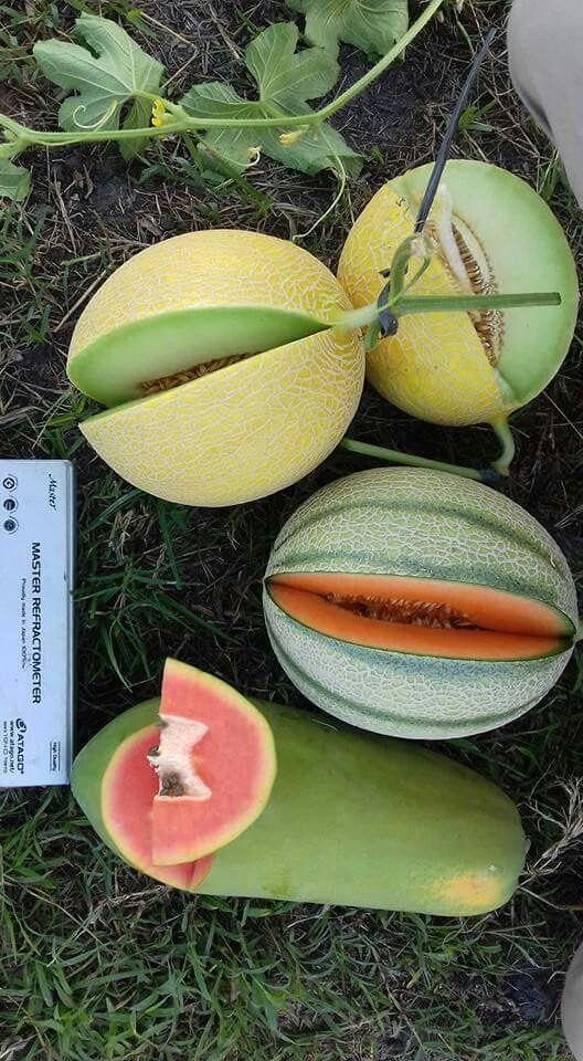 Golden Emerald Melon, Rangipo Melon and California Papaya
