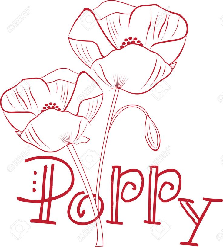 Poppy Line Drawing Tattoo : Capture the exotic beauty of poppy flowers with this