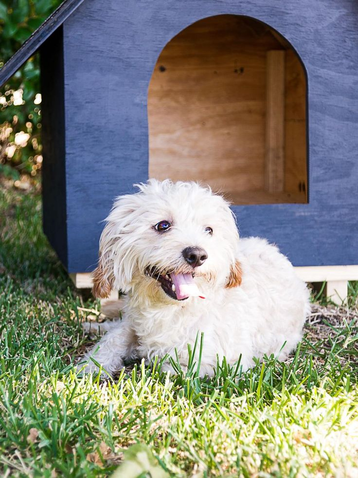 Basic DIY Dog House plans from 1 sheet of plywood| .Use as a base for your creativity! via HGTV