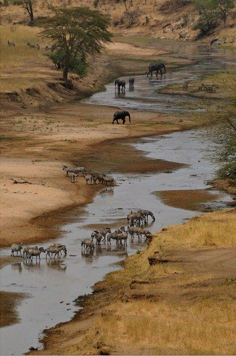 jamas-rendirse:  Last EdenbyMistral Tarangire National Park, Tanzania