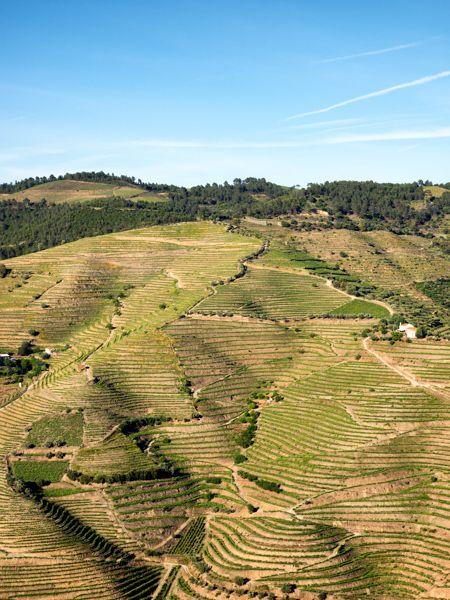 Les vins du Douro, Portugal - via Vino2Travel 23.04.2015 | Le Douro est assurément l'une des plus belles régions viticoles au monde. Ses paysages de vignes centenaires cultivées en terrasses sont d'ailleurs classés au patrimoine mondial de l'UNESCO.