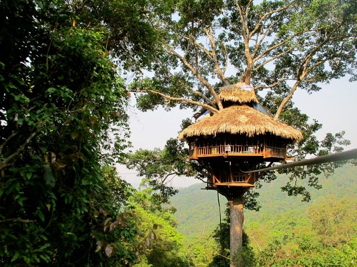 Good Vietnam Treehouse Part - 11: The Crazy House (Hang Nga Tree Villa) In Dalat In Vietnam - Google Search