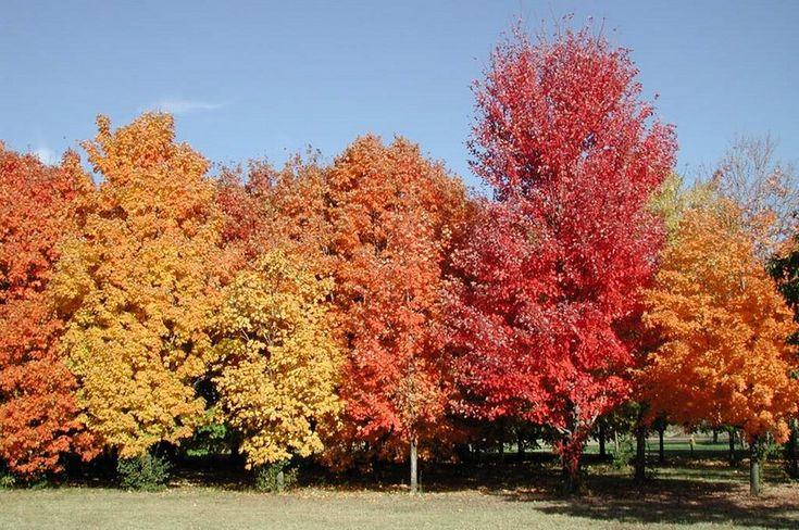 Tres árboles y arbustos de bajo mantenimiento para el jardín