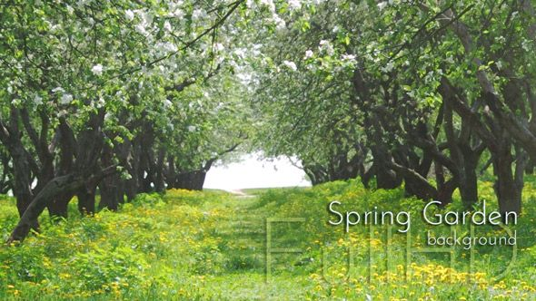 "Flowering Spring Garden From ""Springtime"" photo &video collection."
