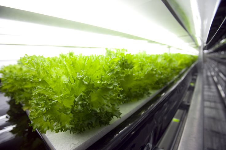 The world's first robot-run farm will harvest 30,000 heads of lettuce daily