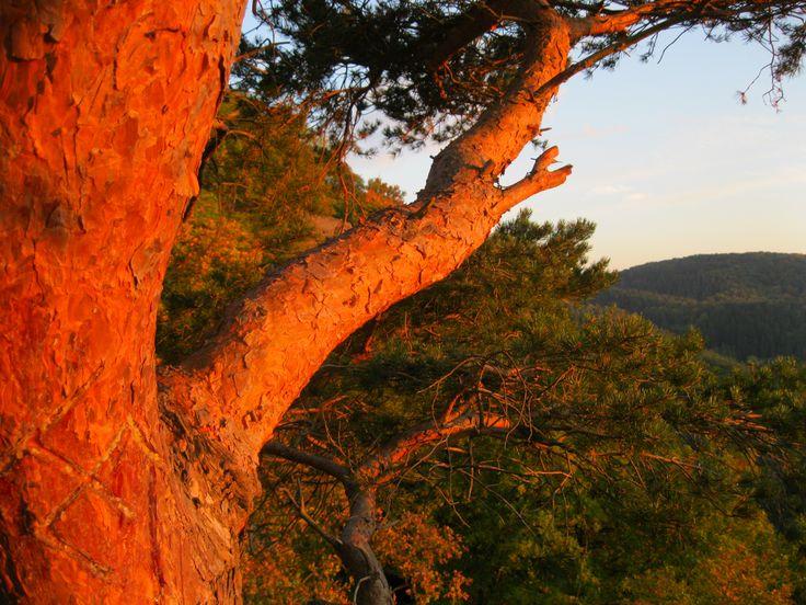 Die Hänge unterhalb der Burg in der Abendsonne