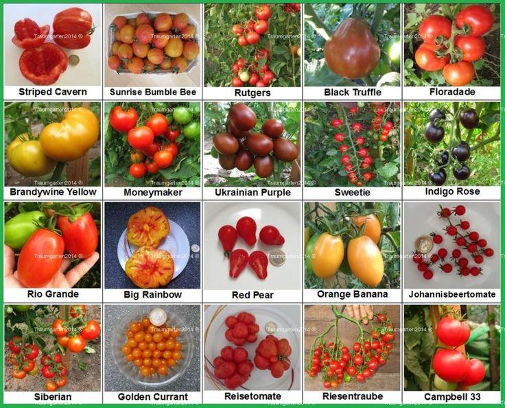 Tomate Set 2: 20 Tomatensorten Tomatenvielfalt samenfest Samen  Saatgut