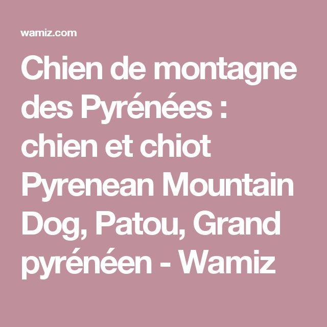 Chien de montagne des Pyrénées : chien et chiot Pyrenean Mountain Dog, Patou, Grand pyrénéen - Wamiz