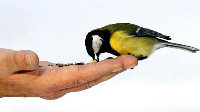 Ornithologie: Vögel füttern ist unsere moralische Pflicht - DIE WELT mobil