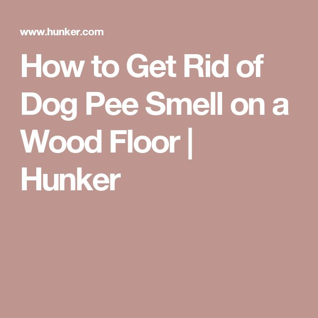 How to Get Rid of Dog Pee Smell on a Wood Floor | Hunker