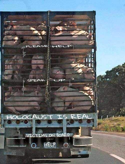 #vegan #animalrights #speciesism