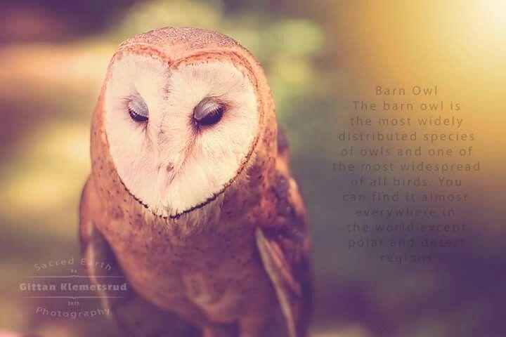 Hazel the beautiful owl