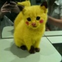 hahaha: Cute Pikachu, Real Life, Pokemon, So Cute, Costume, I Choose You, Kittens, Hate Cat, Animal