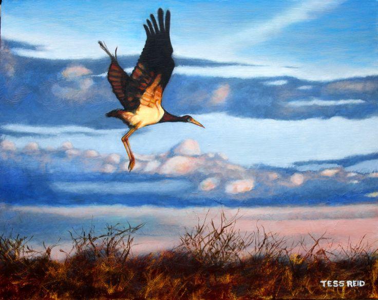 Acryic painting of Abdin's stork in flight by Tess Reid's Fine Art