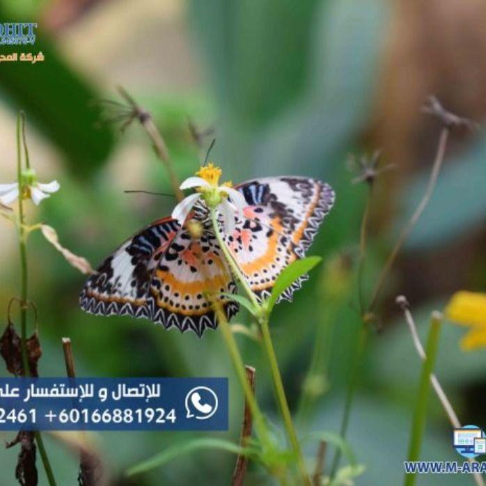حديقة الفراشات بينانج Animals Moth Insects