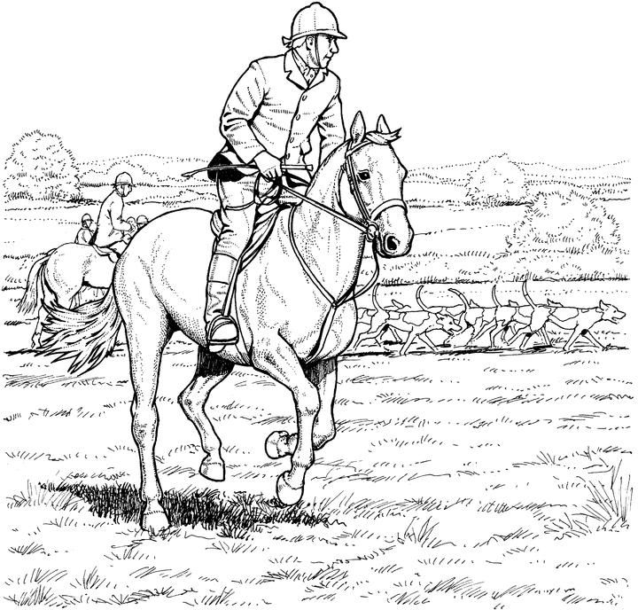 coloring book pages of horses | Equestrians and Riders coloring | Horse Decor | Penguin ...