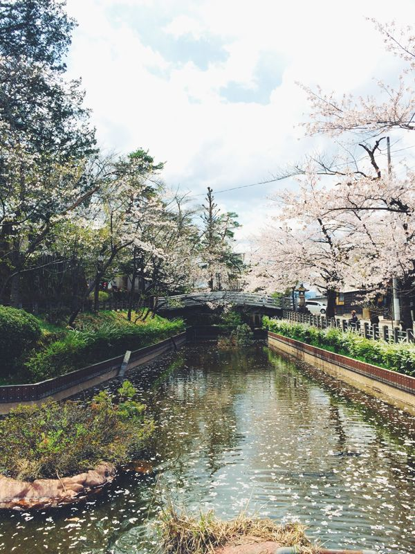 Cherry Blossom lined waterway in Takayama, Japan.   - Explore the World with Travel Nerd Nici, one Country at a Time. http://travelnerdnici.com