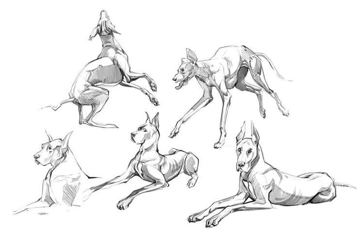 зимний картинки рисунки в движении животные набросок леса, небольшой