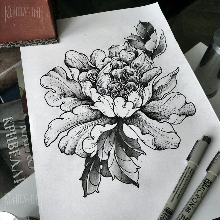 Сhrysanthemum sketch