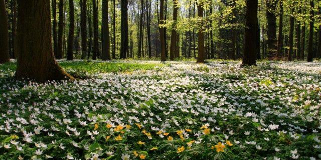 グランドカバーにおすすめ!踏んでも大丈夫な花、多年草10選