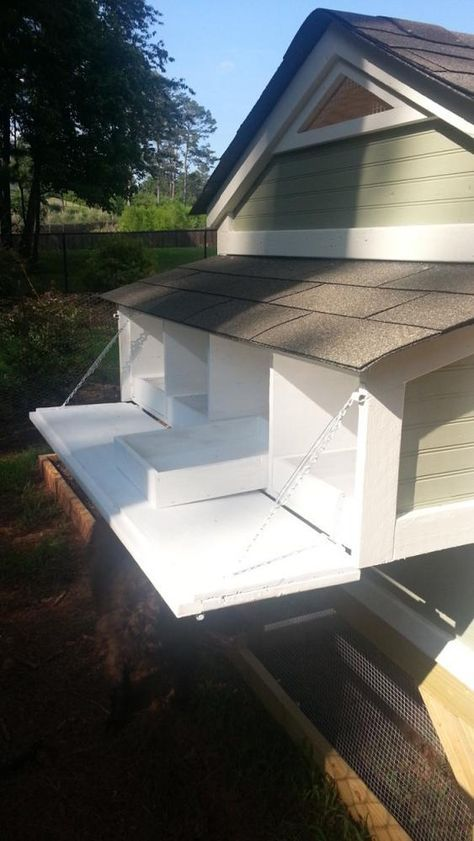 Removable trays in laying boxes for easy clean up of chicken coop