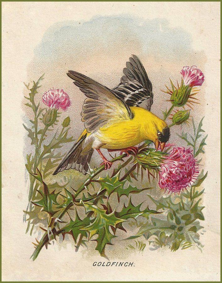 Bird Art~