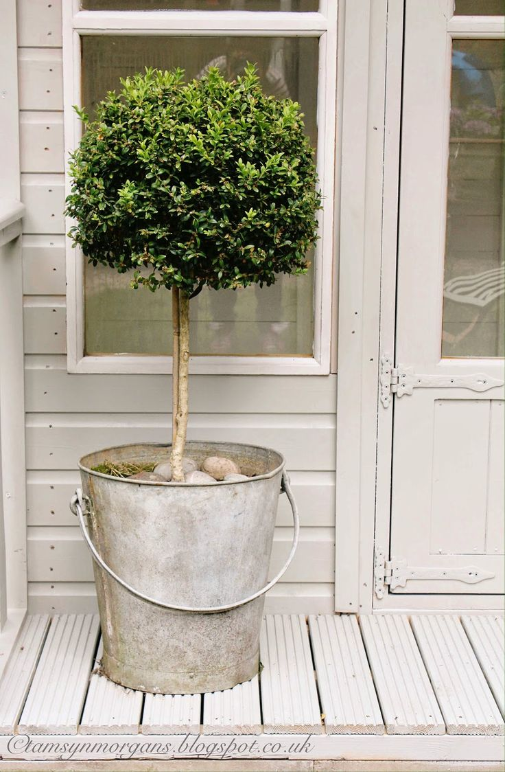 Easy idea for adding plants to your summer porch.....A galvanized bucket holding a boxwood topiary.
