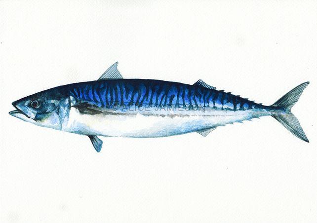 Mackerel Fish A4 Art Print - of Sea Animal Watercolour Painting Bathroom Kitchen £12.00