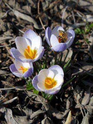 Endlich Frühling!  Nach dem wir schon ein herrliches erstes Frühlingswochenende genießen durften, geht es anscheinend so schön weiter....  Ich finde,wir haben es verdient! Nach diesem grauen Winter ohne Schnee brauche ich dringend Sonne und Farbe!  Die Gartenplanung läuft und es kribbelt mir schon in den Fingern, das ich endlich los legen kann, zu pflanzen.  Ich wünsche euch allen einen guten Start in die Woche!