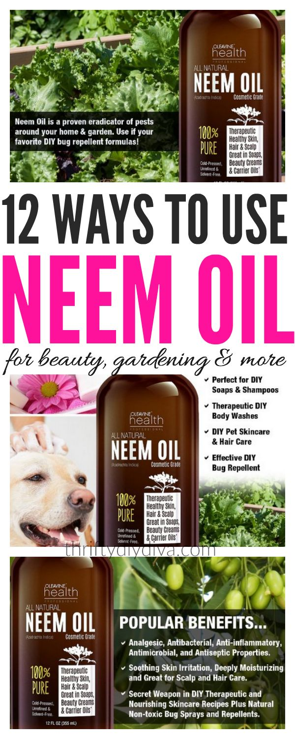 Discover the wonders of Neem Oil benefits for skin, hair, health, gardening, insects and more!
