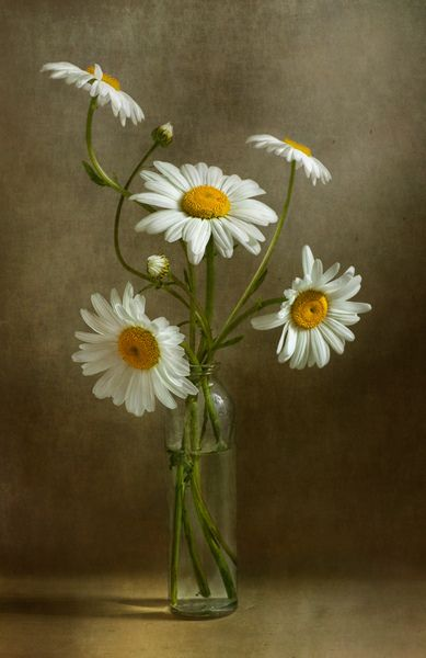 Daisies still life | Flickr - Photo Sharing!