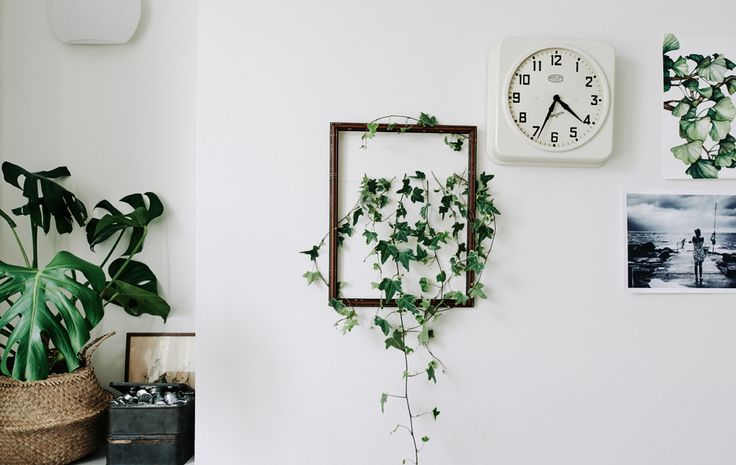 Frame plant cuttings -    1. PUT PLANTS IN THE FRAME Add nature to your walls with framed cuttings – a plain backdrop will ensure extra impact.