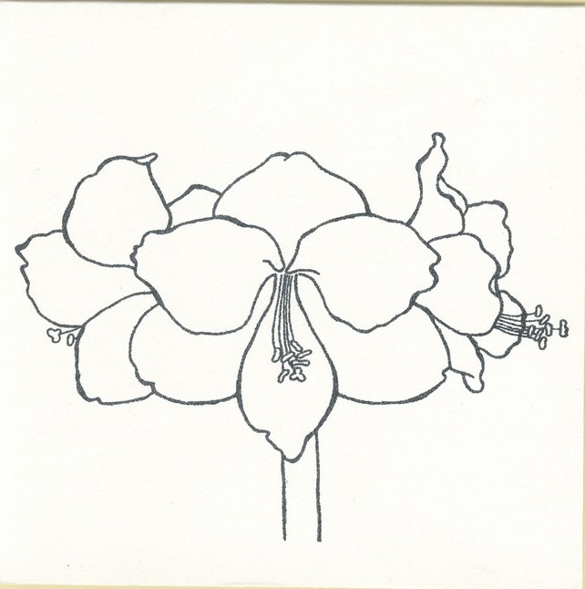 amaryllis coloring pages - photo#23