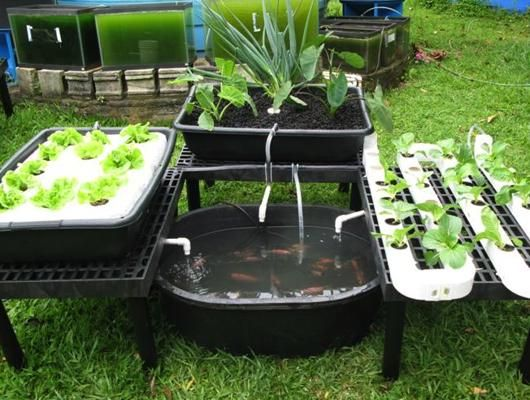 Do It Yourself Home Design: Aquaponics And
