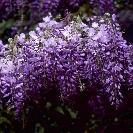Lila Blumen Bestimmen. die besten 25+ Ölgemälde blumen ideen auf ...