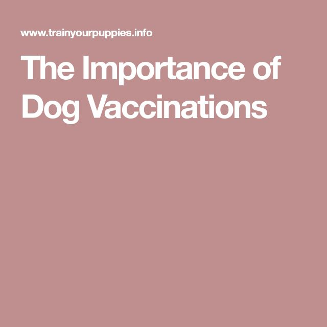 The Importance of Dog Vaccinations