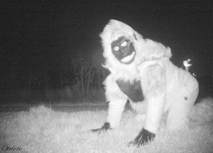 https://ololo.tv/wp-content/uploads/2016/12/main155.jpg Полиция установила камеру ночного видения, чтобы найти пуму, но ситуация вышла из-под контроля - https://ololo.tv/2016/12/policiya-ustanovila-kameru-nochnogo-videniya-chtoby-najti-pumu-no-situaciya-vyshla-iz-pod-kontrolya/