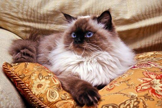 Karmy dla kotów sterylizowanych