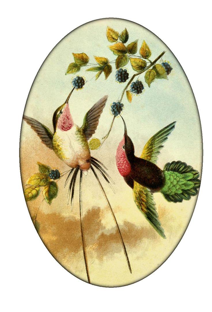 Old Fashioned Hummingbird Outdoor Wall Decor Frieze - Wall Art Ideas ...