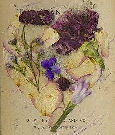 pressed flowers