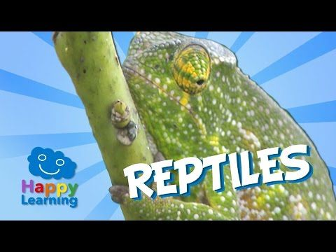 ▶ Reptiles | Educational Video for Kids - YouTube