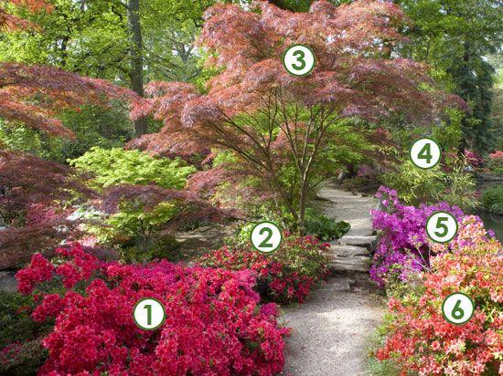 Un coin de jardin japonisant et zen (Scènes de jardins)