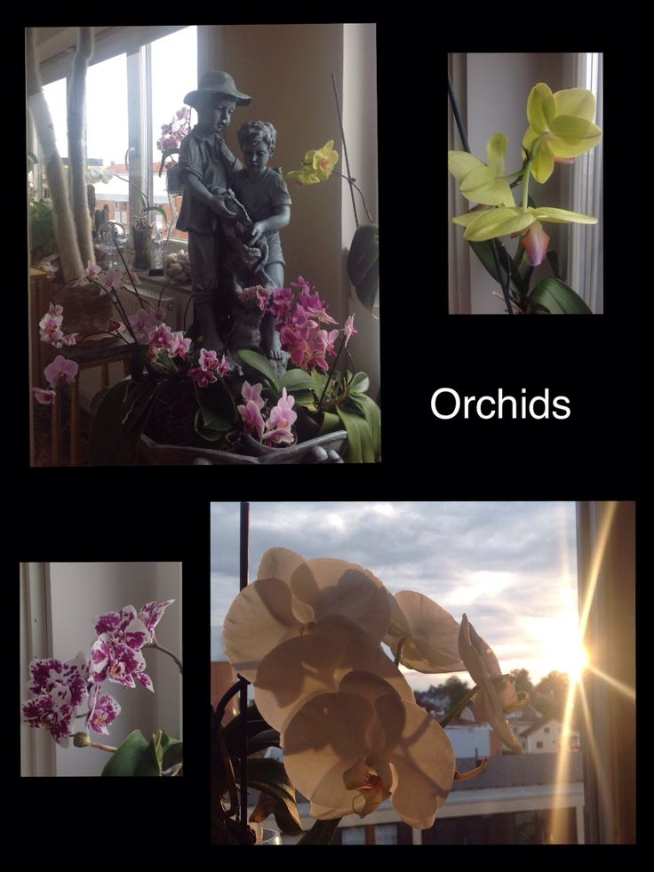 Orchids in the Summer.