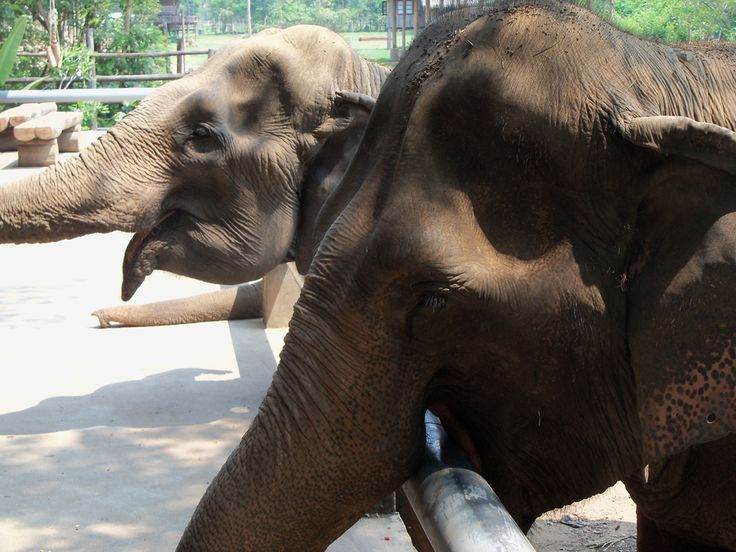 In Thailand, elephants are often subject to forced labour and cruel treatment. We hear the story of Sangduen 'Lek' Chailert's sanctuary in Chiang Mai.