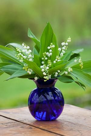 Blue vase of Lily of the Valley... One of my favorites! Smells like Spring!