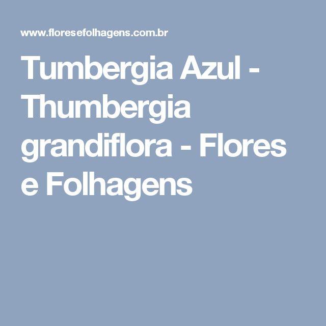 Tumbergia Azul - Thumbergia grandiflora - Flores e Folhagens